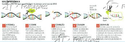 Edição genômica
