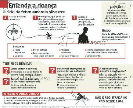 Entenda a doença – O ciclo da febre amarela silvestre