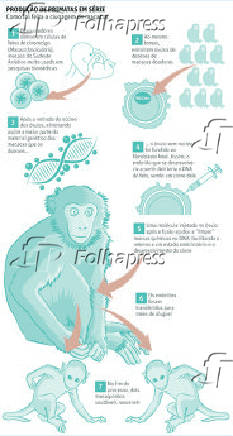 Produção de primatas em série