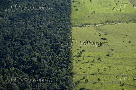 Floresta e pasto próximos