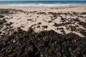Manchas de óleo na praia da Pituba, em Salvador (BA)