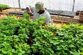 Estufa com estudos e experimentos de novas variedades de soja