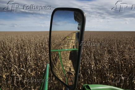 Colheita de milho na Fazenda Recanto