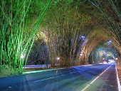 Túnel de bambuzal na entrada Aeroporto de Salvador (BA)