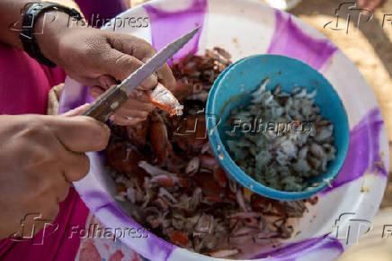 Trabalho de extração da carne do caranguejo no quilombo de São Francisco do Paraguaçu