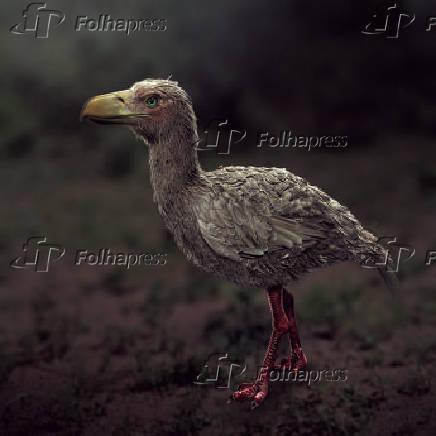 Foi uma ave da família Phorusrhacidae