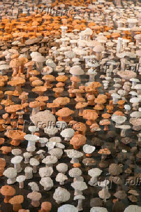 Cogumelos de barro na ala organizada pelo artista espanhol Antonio Ballester Moreno