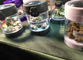 Produtos de maconha à venda em feira em Washington